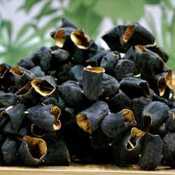 Dolmalık Kuru Patlıcan 1 Bağ 50 Adet (Antep Mahsulü Siyah)