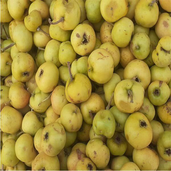 Alıç Meyvesi Yaş 1 Kg